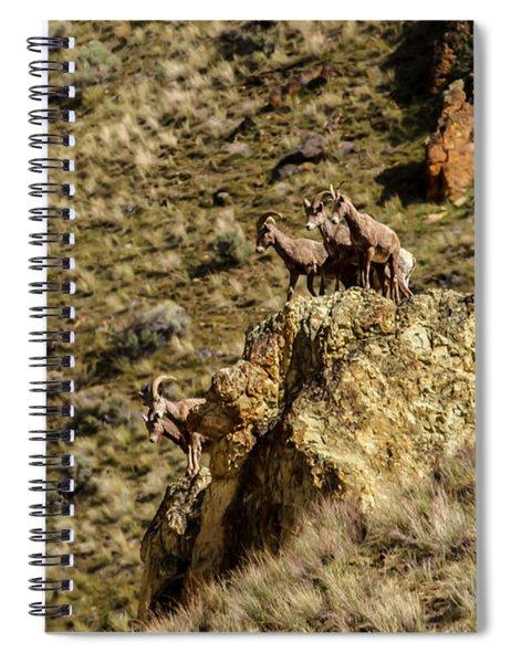 Posing Bighorn Sheep Spiral Notebook