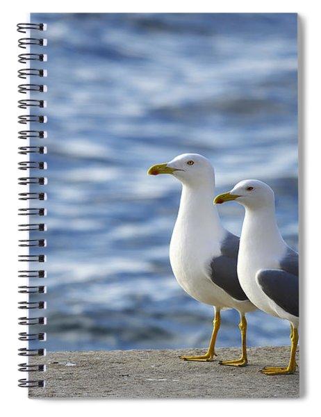 Posing Seagulls Spiral Notebook