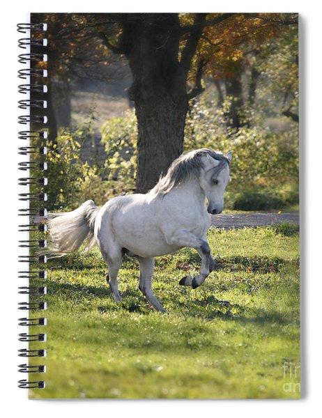 Practicing Levade Spiral Notebook