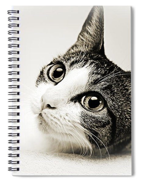 Precious Kitty Spiral Notebook