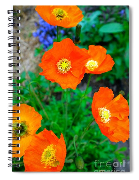 Pretty In Orange Spiral Notebook