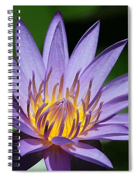Pretty Purple Petals Spiral Notebook