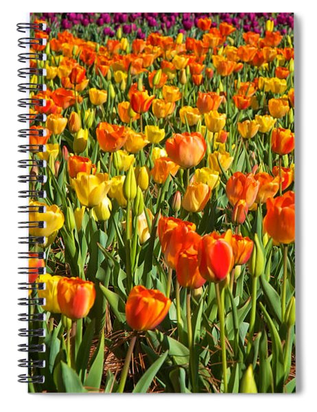 Profusion Of Tulips Biltmore Estate Nc Spiral Notebook