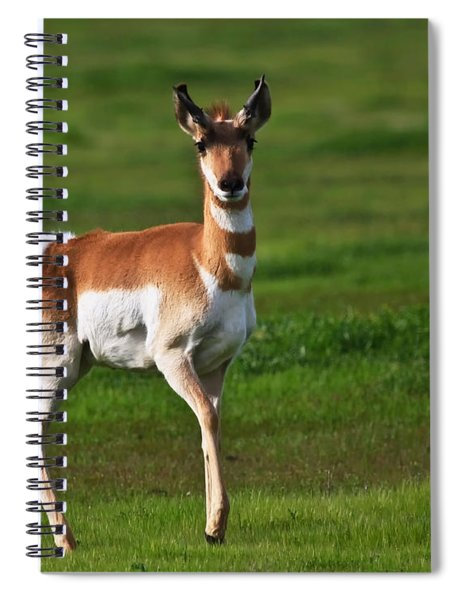 Pronghorn Antelope Spiral Notebook