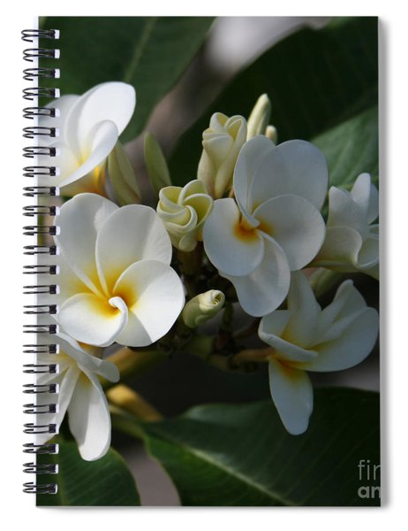 Pua Melia Na Puakea Onaona Tropical Plumeria Spiral Notebook