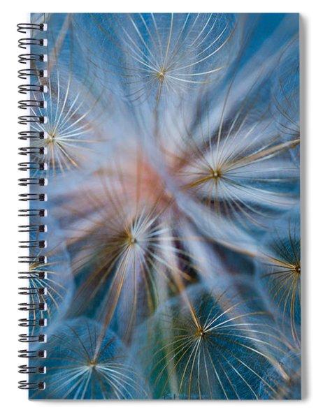 Puff-ball In Blue Spiral Notebook