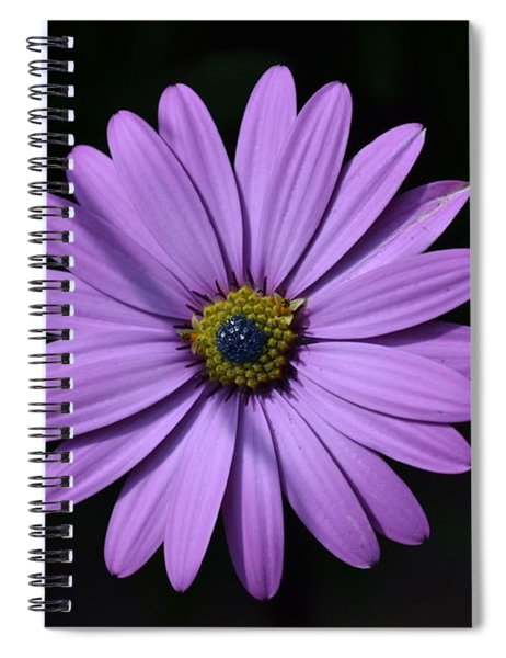Spiral Notebook featuring the photograph Purple African Daisy by Scott Lyons