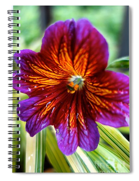 Purple And Orange Spiral Notebook