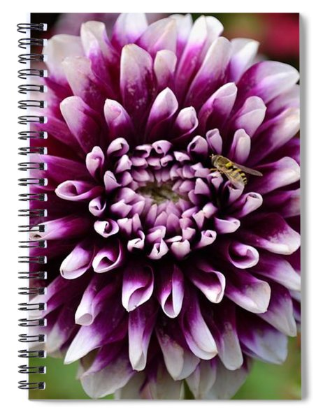Spiral Notebook featuring the photograph Purple Dahlia White Tips by Scott Lyons