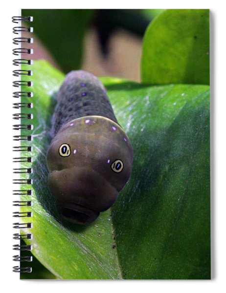 Purple Polkadots Spiral Notebook