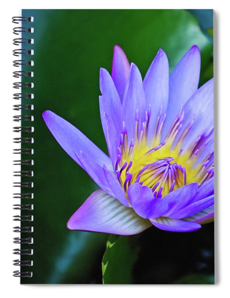 Purple Water Lily Spiral Notebook