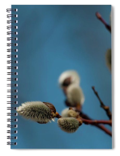 Pussy Willow... Spiral Notebook