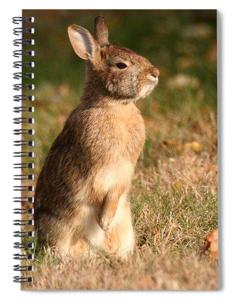 Rabbit Standing In The Sun Spiral Notebook