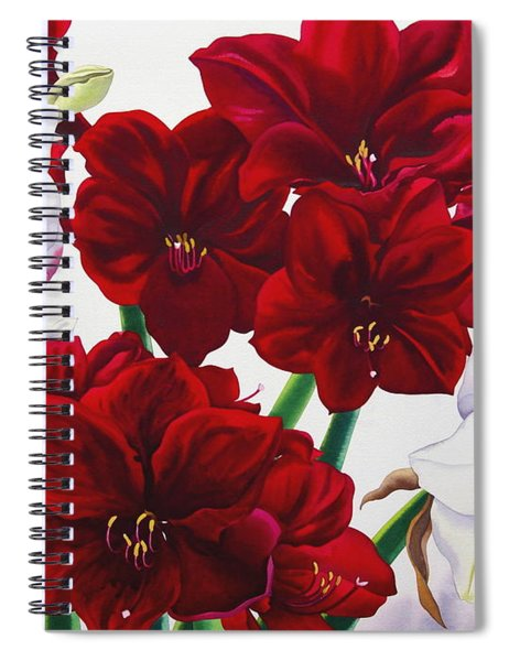 Red And White Amaryllis Spiral Notebook