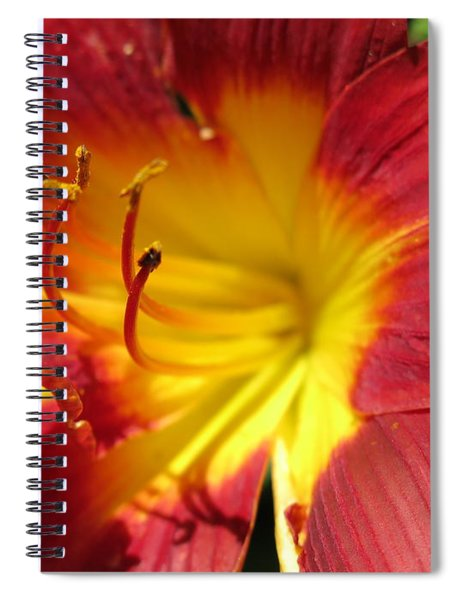 Red And Yellow Day Lily Spiral Notebook