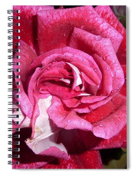 Red Beauty 2  Spiral Notebook