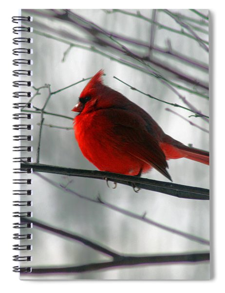 Red Cardinal On Winter Branch  Spiral Notebook