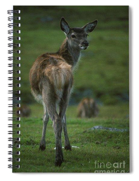 Red Deer Calf In October Spiral Notebook