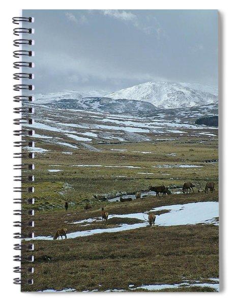 Red Deer Stags In A Highland Glen Spiral Notebook
