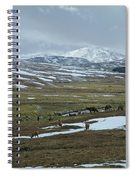 Red Deer Stags In A Highland Glen Spiral Notebook