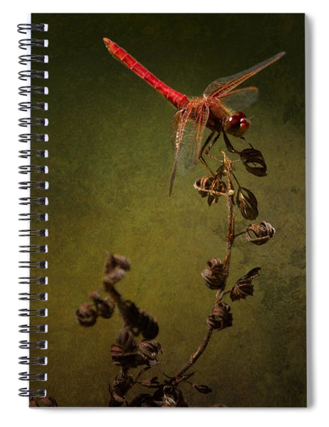 Red Dragonfly On A Dead Plant Spiral Notebook