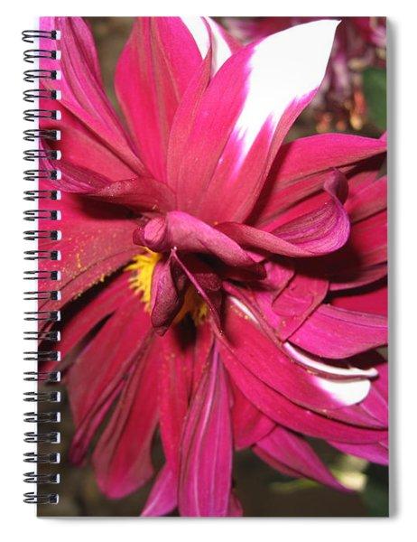 Red Flower In Bloom Spiral Notebook