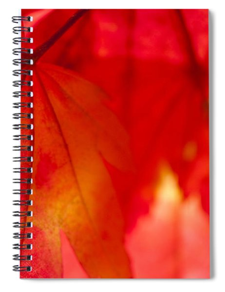 Red Hot Spiral Notebook