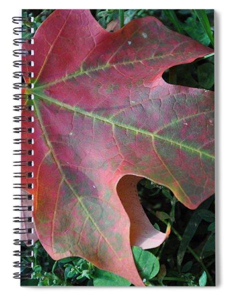 Red Leaf Spiral Notebook