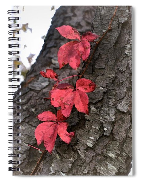 Red Leaves On Bark Spiral Notebook