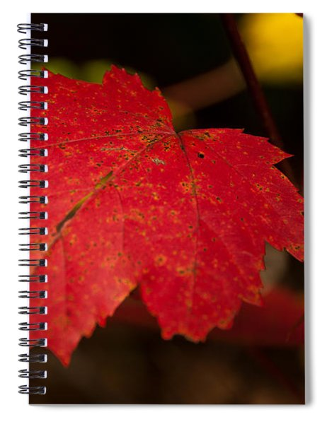 Red Maple Leaf In Fall Spiral Notebook
