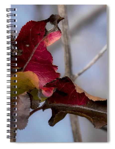Red Over Branch Spiral Notebook