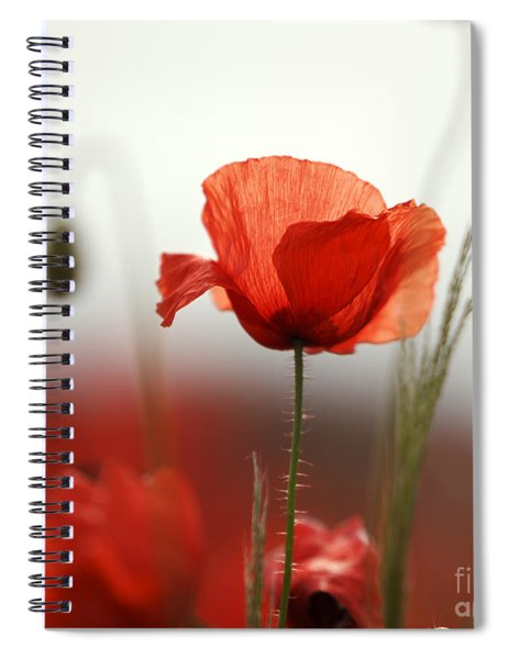 Red Poppy Flowers Spiral Notebook
