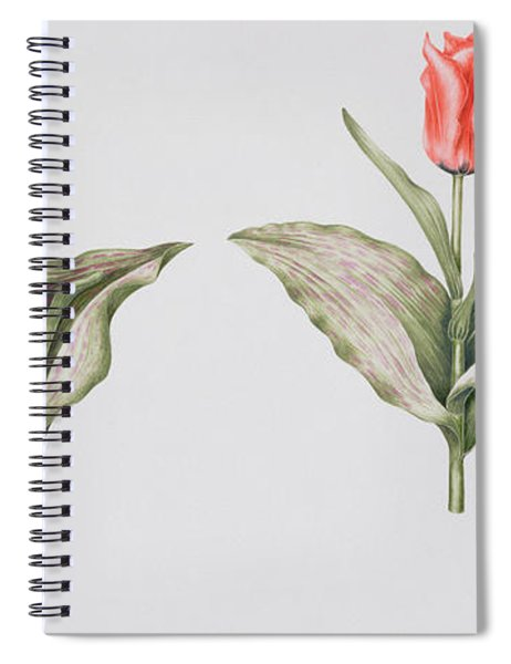 Red Riding Hood Spiral Notebook