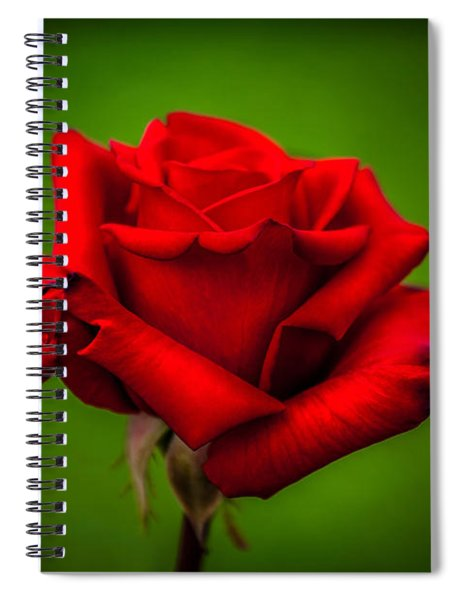 Red Rose Green Background Spiral Notebook