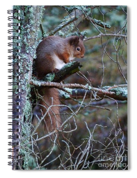 Red Squirrel On Pine Tree Spiral Notebook