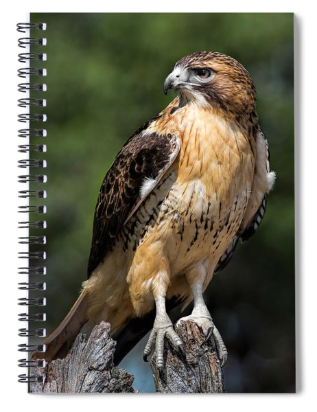 Red Tail Hawk Portrait Spiral Notebook