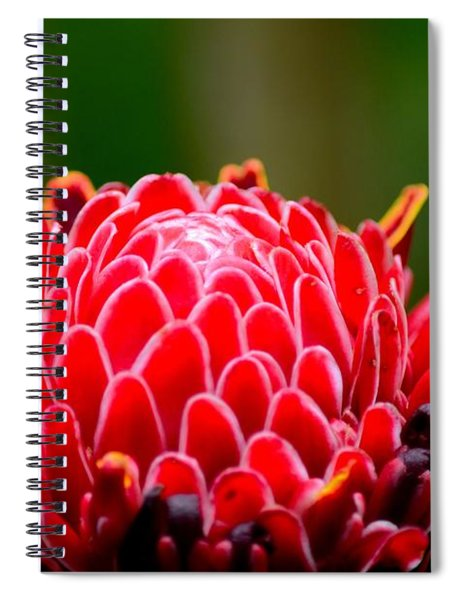 Red Torch Ginger Flower Head From Tropics Singapore Spiral Notebook