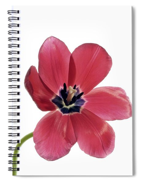 Red Transparent Tulip Spiral Notebook