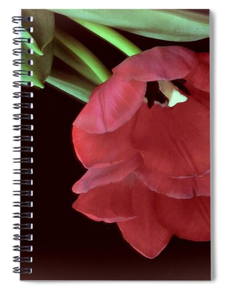 Red Tulip On Burgundy Spiral Notebook