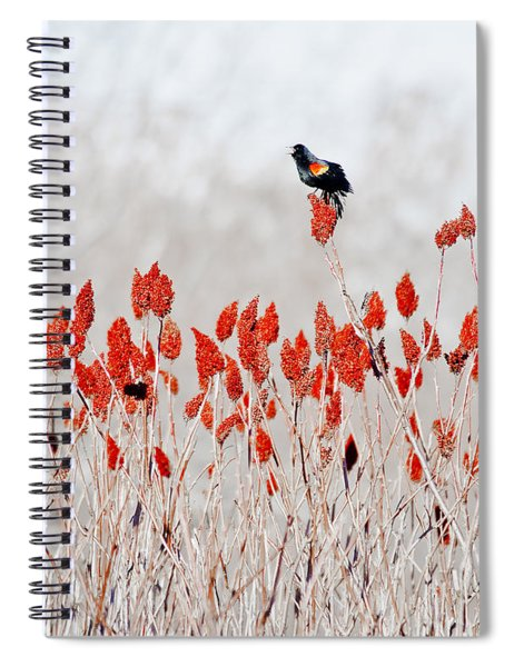 Red Winged Blackbird On Sumac Spiral Notebook