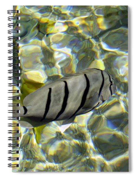 Reflection Fish Spiral Notebook