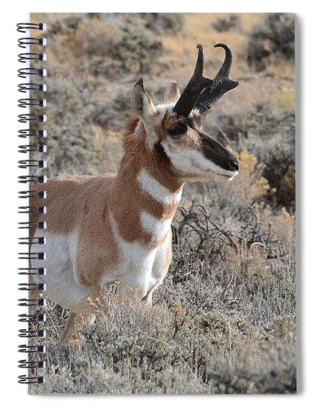 Regal Patriarch Spiral Notebook