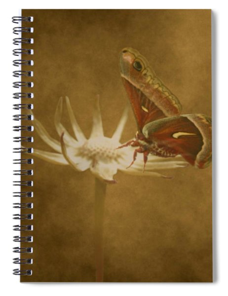 Resting Moth Spiral Notebook