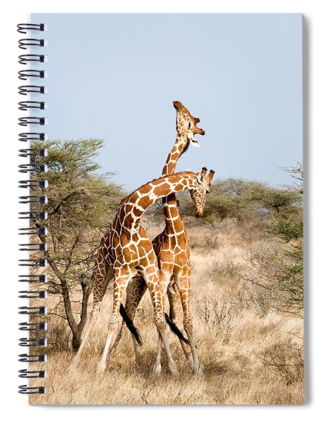 Reticulated Giraffes Giraffa Spiral Notebook