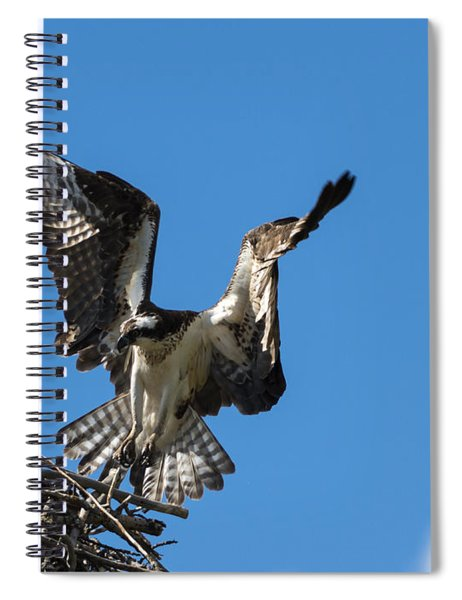 Returning To The Nest Spiral Notebook