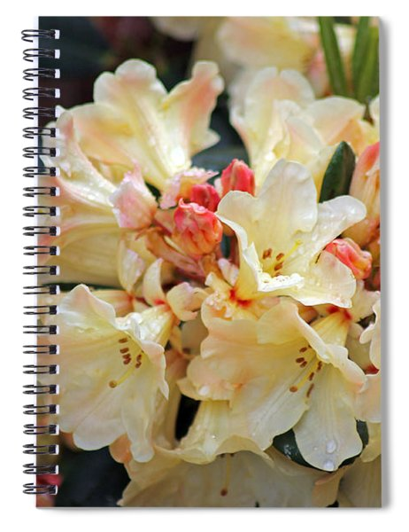 Rhododendron Nancy Evans Spiral Notebook
