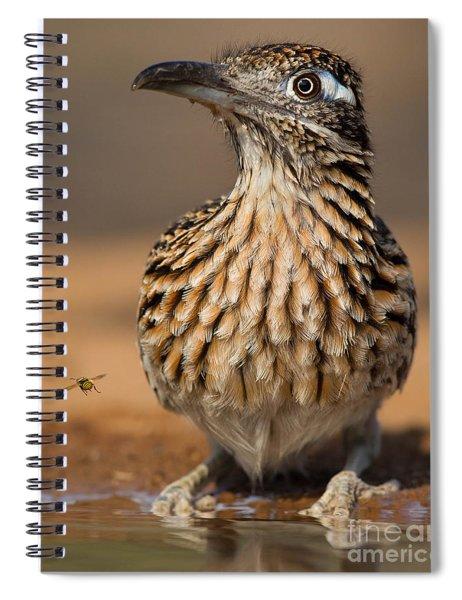 Greater Roadrunner No 1 Spiral Notebook