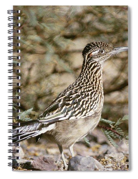 Roadrunner Geococcyx Californianus Spiral Notebook
