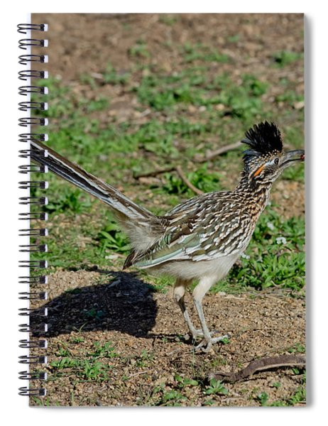 Roadrunner Male With Food Spiral Notebook