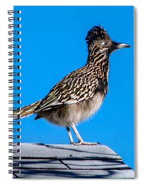 Roadrunner Spiral Notebook